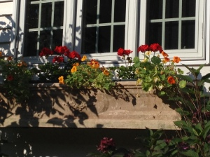 Red geranium and nasturtiums to replace the zinnia