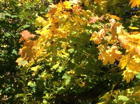 Thankful for Fall Foliage.